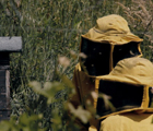 The Time of the Bees (Il Tempo delle api)